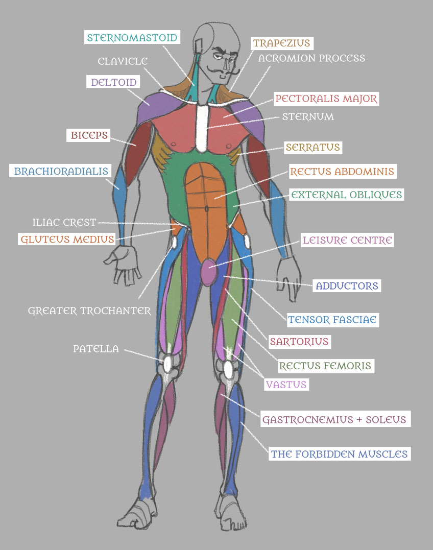 Human Anatomy: Muscles with Labels! by Pseudolonewolf