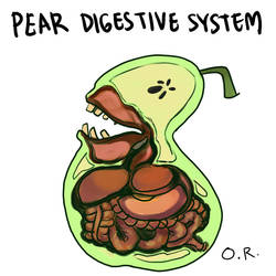 Digestive System of a Pear by oshirottingham