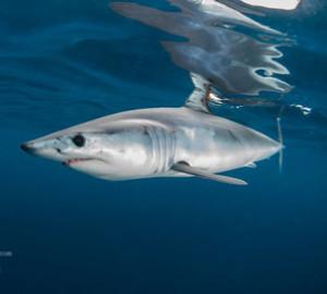 Sharklover74's Profile Picture