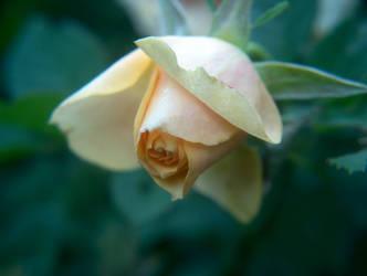 Garden - Sadness by greendruid