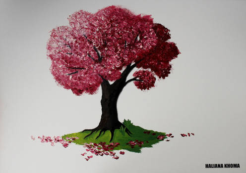 Japanese Sakura Tree in Bloom