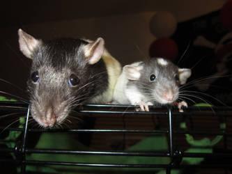 Begging: Rat Style by SabrielDrakkan