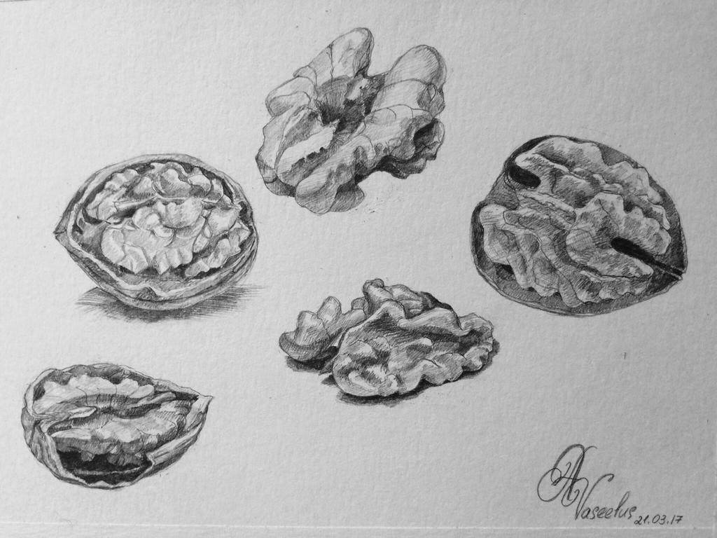 Walnuts by Vaseelus