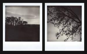Polaroid 1_10 + Polaroid 2_10 by Rechbi