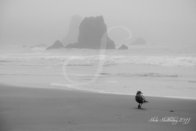 Battle Rock Beach Blk and Wht Updated by Scooby777