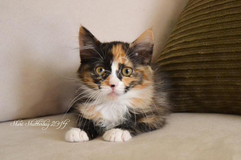 Itty Bitty Precious Kitty II by Scooby777