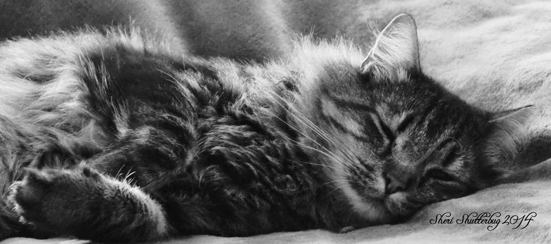 Sleepy Kitty by Scooby777