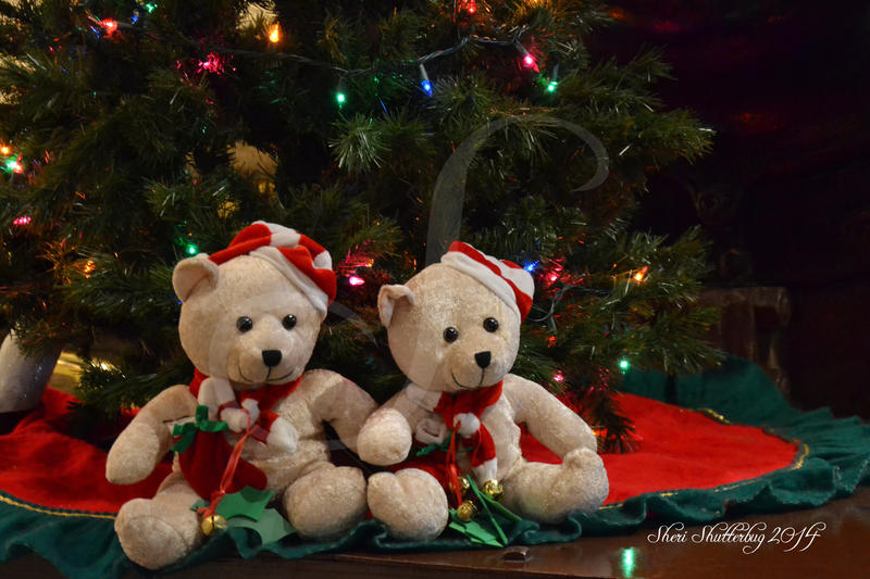 Christmas Bears by Scooby777