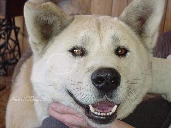 Lobo 1997 - 2006 by Scooby777