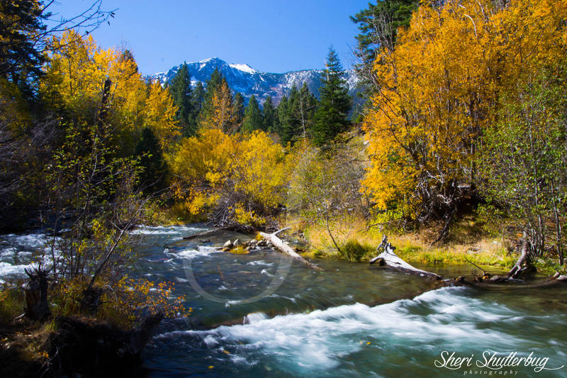 Taylor Creek by Scooby777