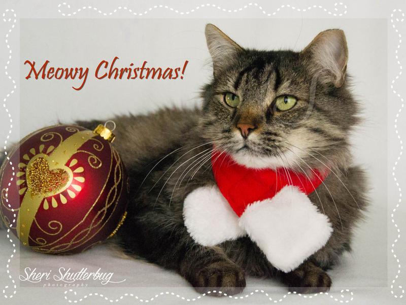 Meowy Christmas II by Scooby777