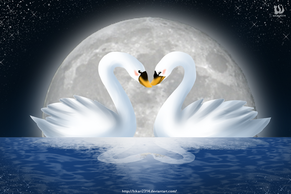 Swans in love drawing