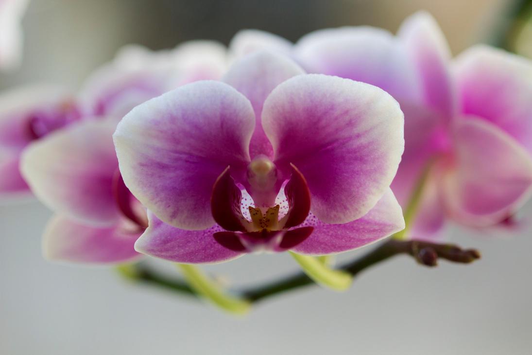 Pink flowers by JamesDensham