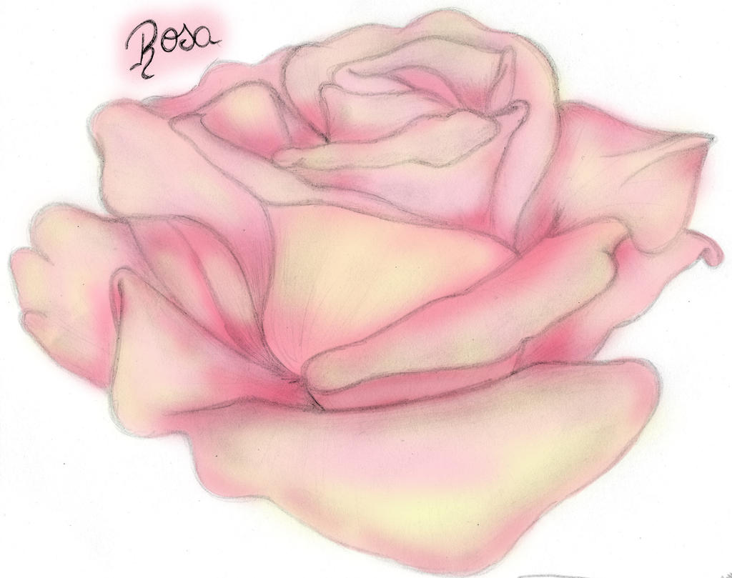 Pink Rose by cuoredivetroo