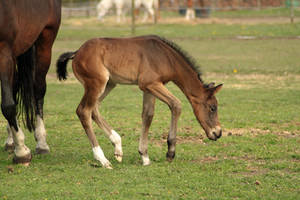 Foal stock 27 by Bundy-Stock