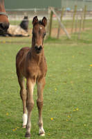 Foal stock 37 by Bundy-Stock