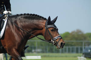 Dressage stock 69 by Bundy-Stock