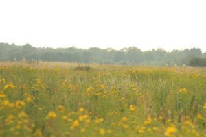 Landscape stock 16 by Bundy-Stock