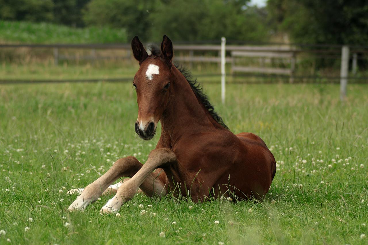 Foal stock 78 by Bundy-Stock