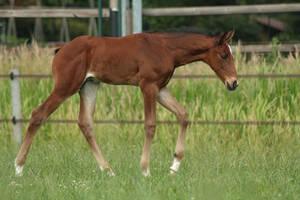 Foal stock 119 by Bundy-Stock