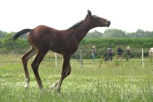 Foal stock 128 by Bundy-Stock