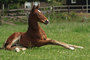 Foal stock 141 by Bundy-Stock