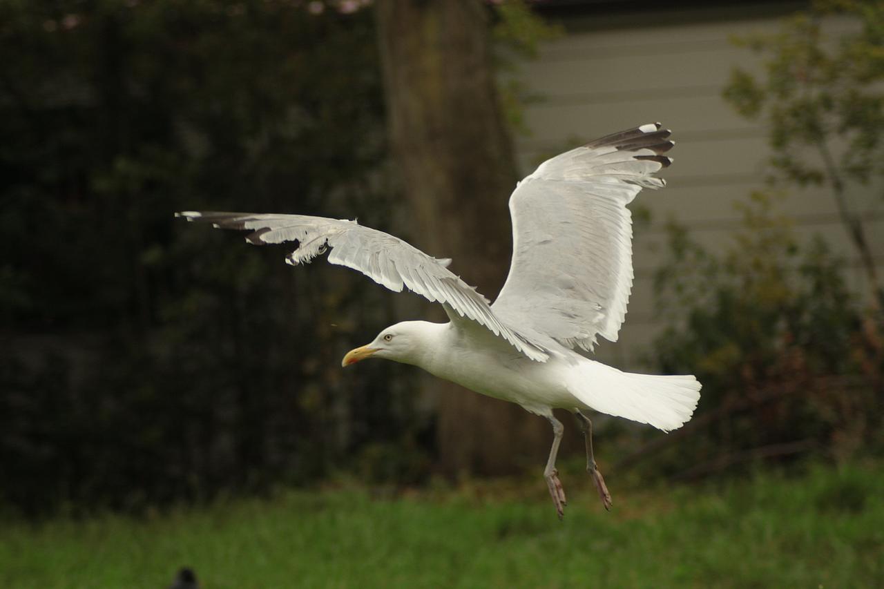 Bird stock 42 by Bundy-Stock