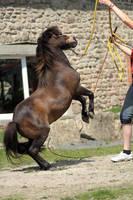 Pony tricks stock 9 by Bundy-Stock