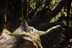 White Pines Stock 24 by almondjoyy5