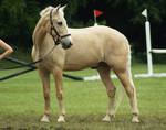Eventing Horse Show Stock 11