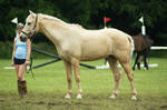 Eventing Horse Show Stock 10