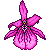 Pink Pixel Orchid