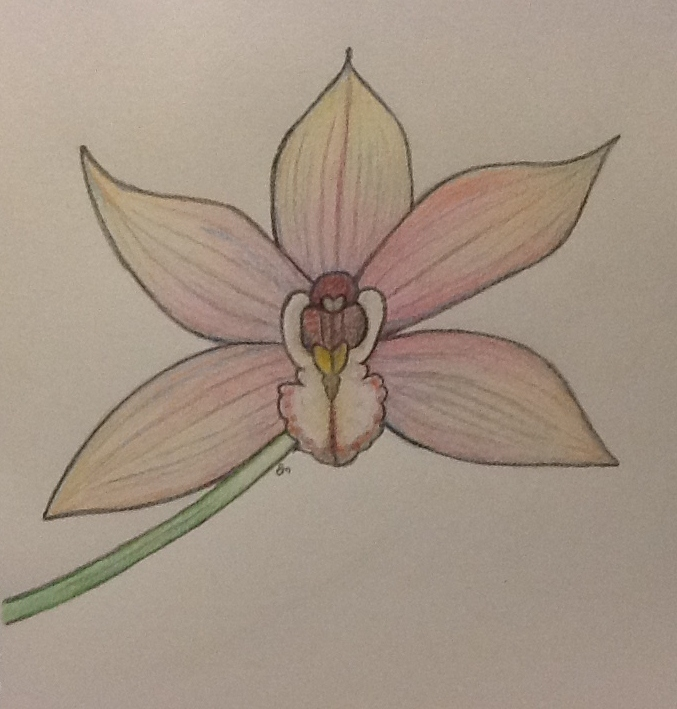 Pink Orchid Drawing by Amazinadrielle on deviantART