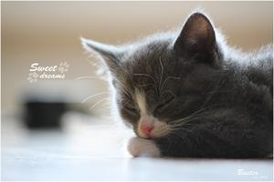 Sweet dreams by Gex78