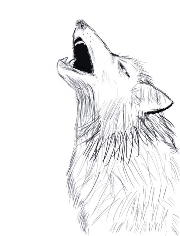 Wolf Howling Sketches