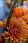 A tiny pumpkin