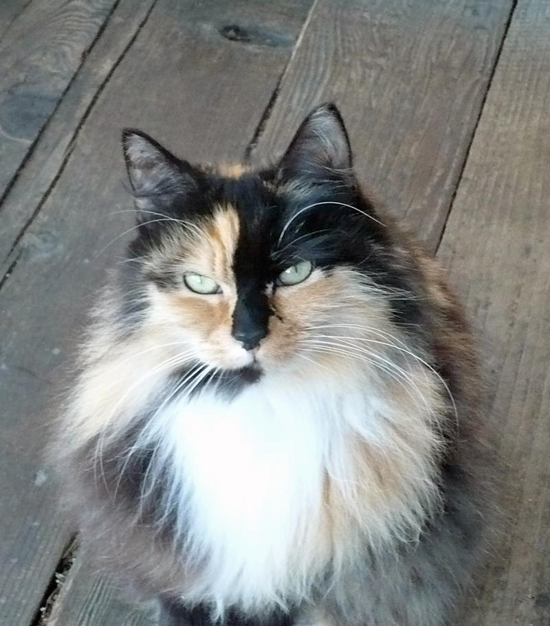 Cat On Doorstep Hit In Nose Gif