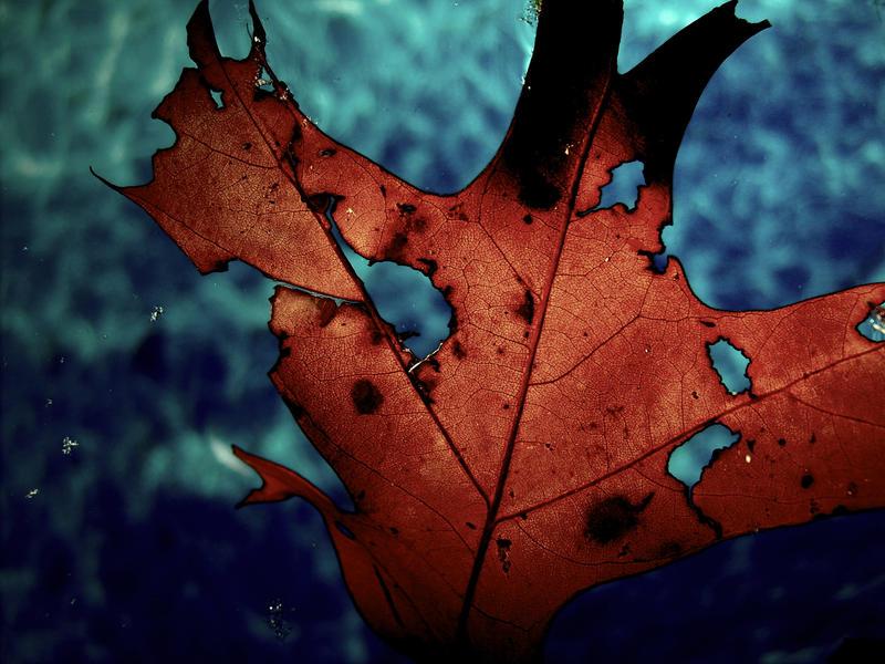 Leaf by KairaTheGreat