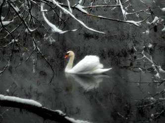 Cisne blanco by MisterCoqui
