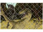 Colored Raptor Sketch