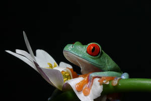 The frog on the flower by twilightesque
