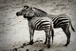 Soulmates Zebras