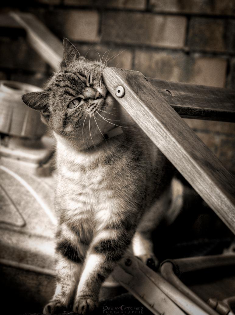 Feline by WinonaPhotographie