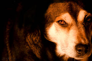 Wolf Ancestor by WinonaPhotographie