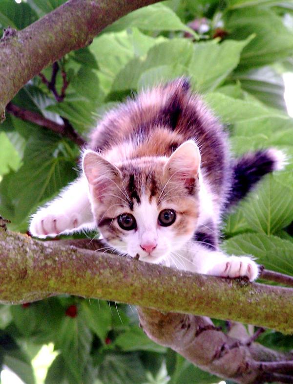 http://fc02.deviantart.net/fs40/i/2009/018/b/e/excited_cat_by_Akhee.jpg