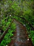 Boardwalk in the Rain by daisysunshineyay
