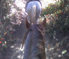 Im onna Horse by Azolio