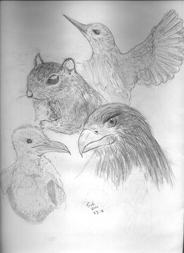 Animals by SVL