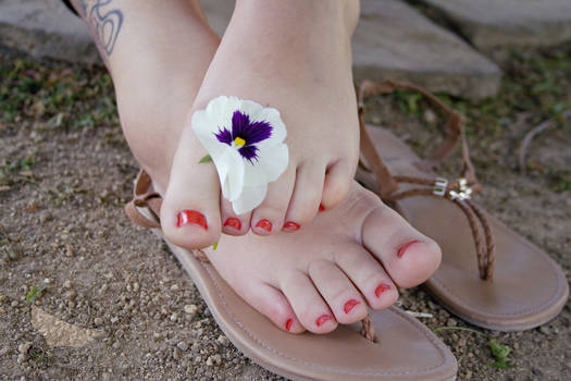 Jasmin - Pansy Flower