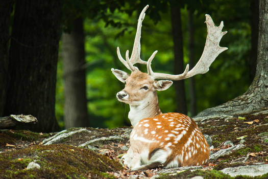 Great Prince of the Forest